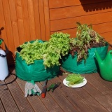 Pack of 2 Salad Planters PB6